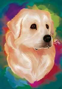 maremma-sheepdog