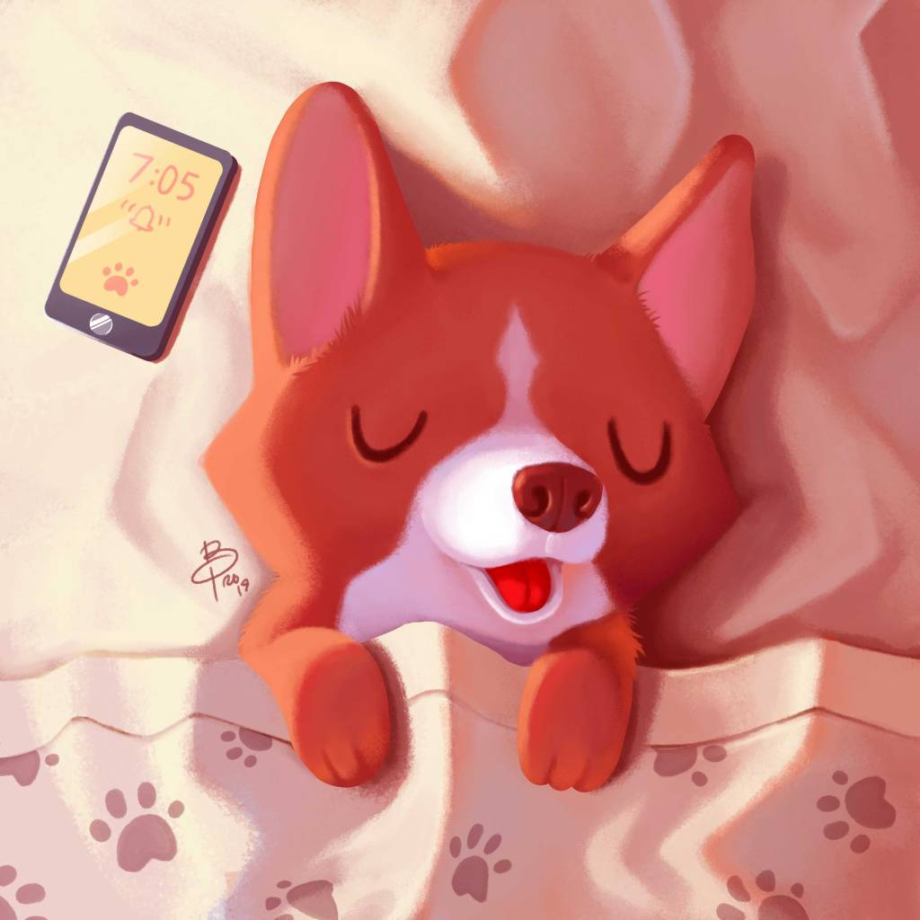 sleep-corgi